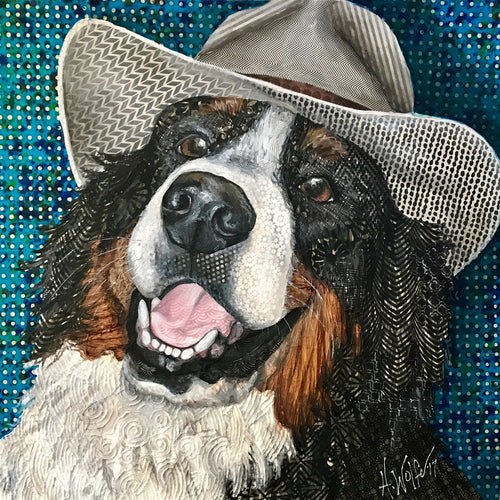 Dually - Bernese Mountain Dog