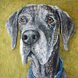 Guinness -  Great Dane