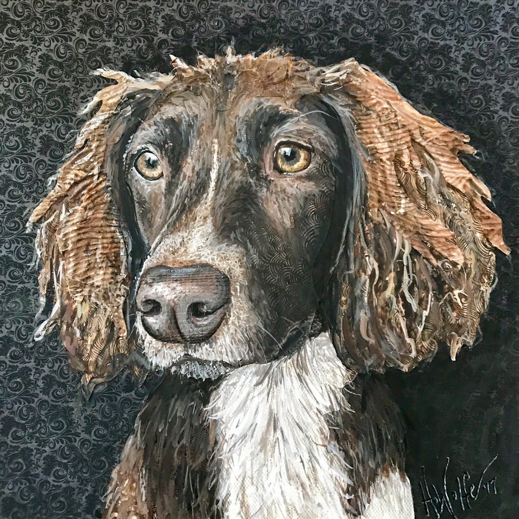 Bailey - English Springer Spaniel
