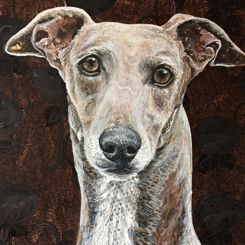 Gia - Greyhound
