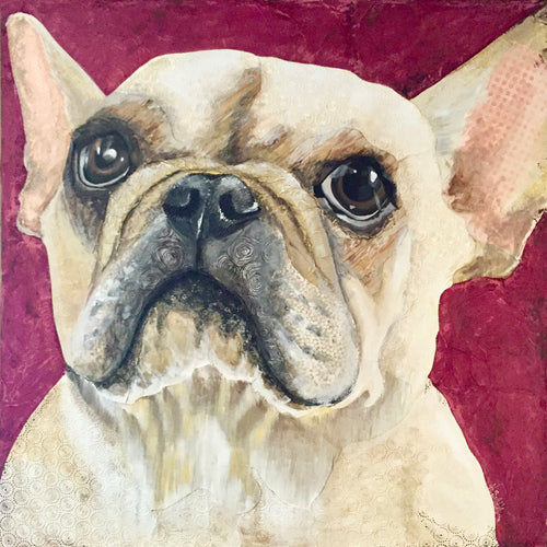 Fifi - French Bulldog