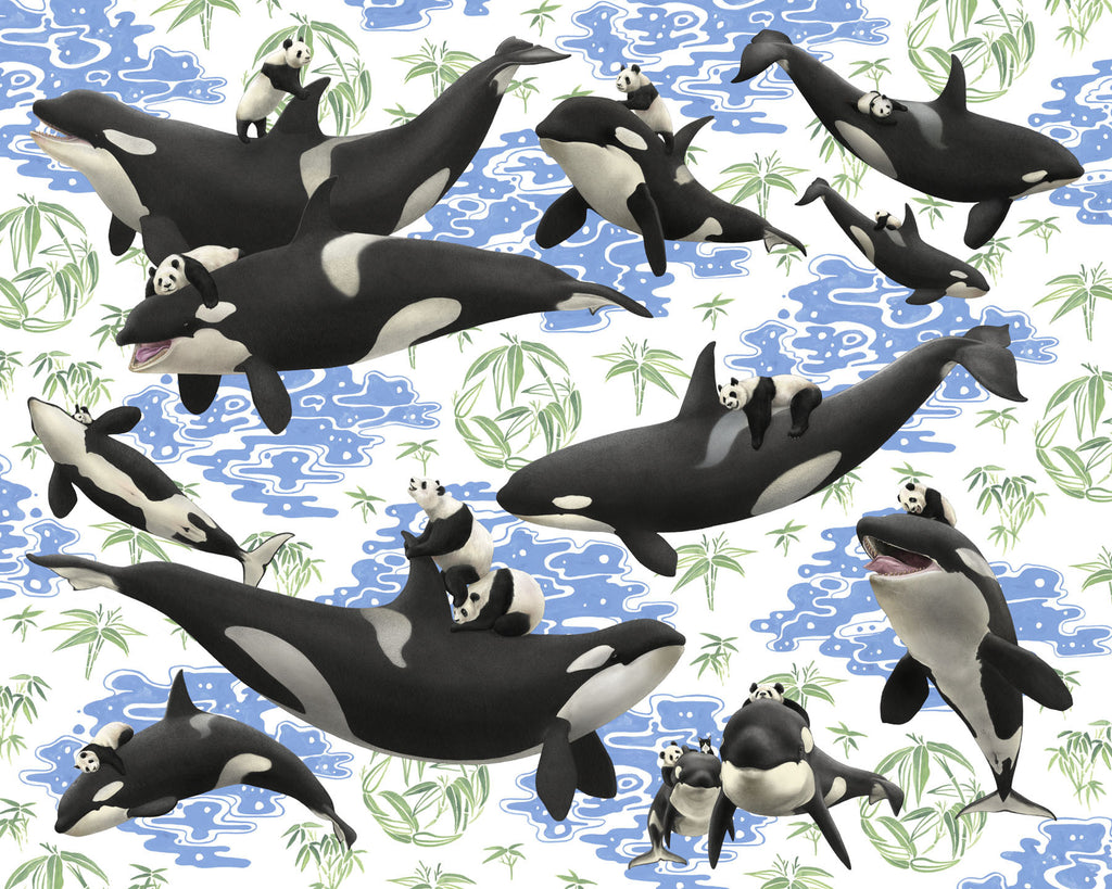 captives orcas n u0027 pandas