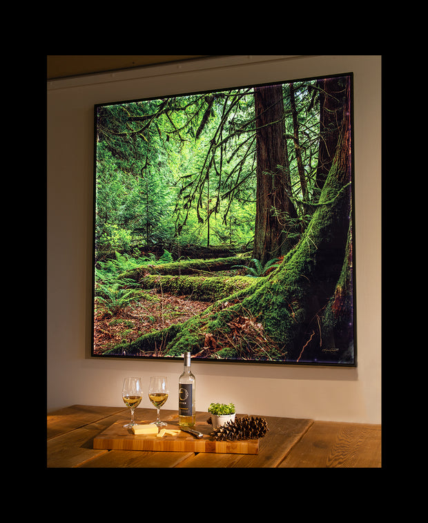A wine and cheese spread in front of a large, square backlit image. A forest scene of emerald green flora and tall, robust moss-covered old growth trees in Harrison Lake, British Columbia, Canada.