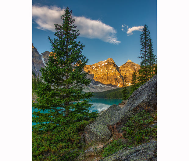 A pine tree dominates the landscape, overlooking the turquoise Moraine Lake and the Rocky Mountains in Alberta, Canada. Blue skies with two clouds, and sunrise hits the peaks
