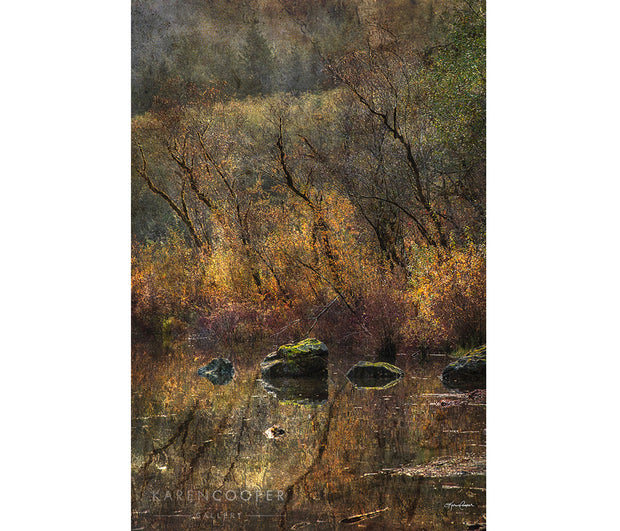 Fine art luxury  nature landscape photography Trees and grasses along lakeshore lit by golden light.