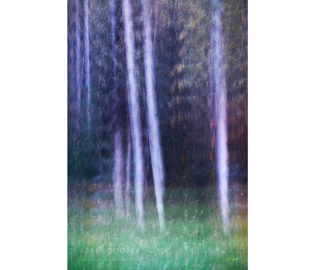 Fine art luxury  nature landscape photography White birch trees with fall foliage among grasses in British Columbia