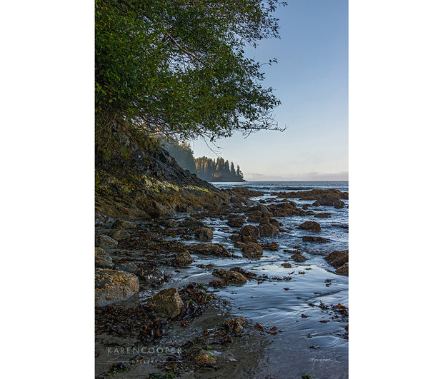 Fine art luxury nature landscape contemporary photography by Karen Cooper GalleryA rocky, sand-covered beach with an overhanging green tree at dawn in Vancouver Island British Columbia Canada
