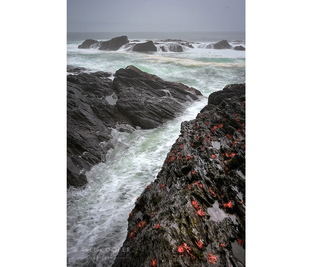 A stormy sea and grey sky with large waves crashing against the black rocks of the shoreline, with some covered in red seaweed.