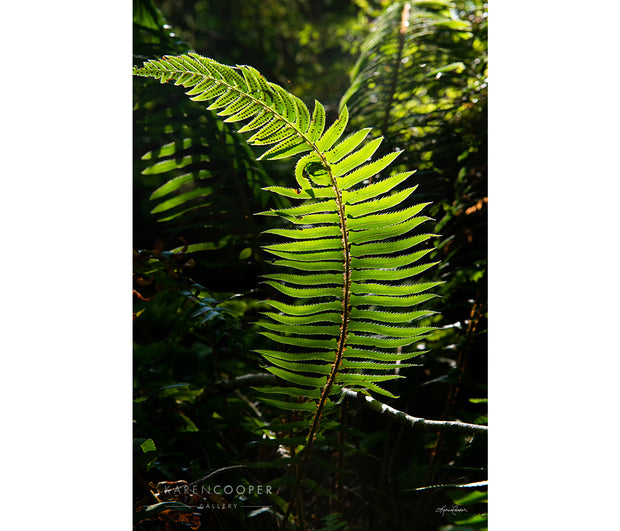 Detail of a young, curving green fern on the forest floor