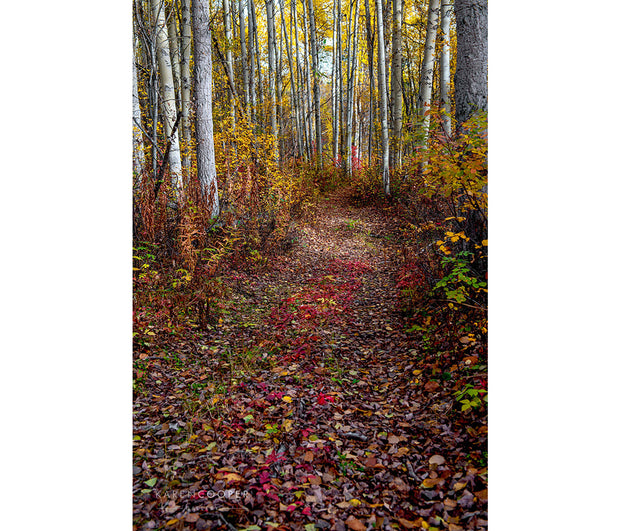 A pathway running through a birch forest that is completely covered by red, yellow, and green leaves