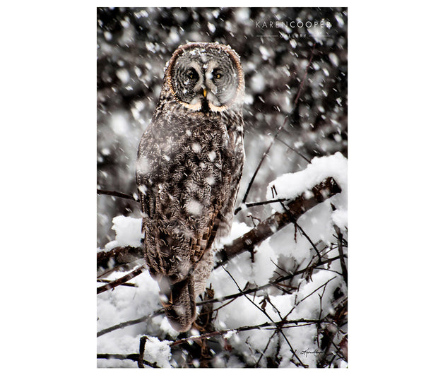 Great Grey Owl Vertical