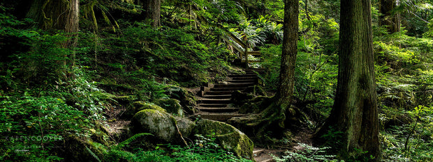 A wooden staircase leading from the path up a slope, surrounded by large ferns and other green foliage, along with tall thin, moss covered trees.