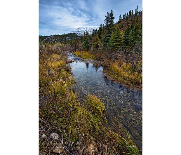 A clear stream of water with a rockbed runs through the scene of short, green wild grasses and pine trees.