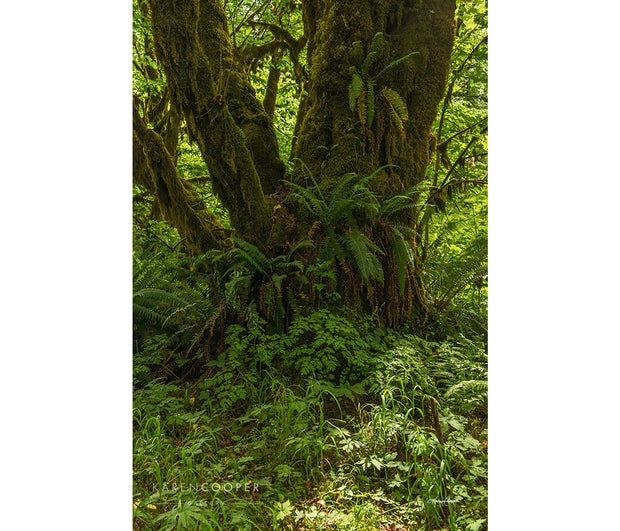 A large maple tree covered in emerald green ferns and thick moss. The ground around the tree is covered in a variety of bright green flora and grasses.