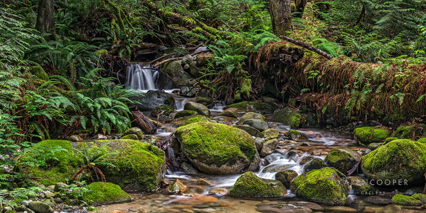 A flowing stream with a small waterfall flowing over moss-covered rocks. Surroundings are dominated by bright green moss and ferns, with browning foliage mixed throughout.