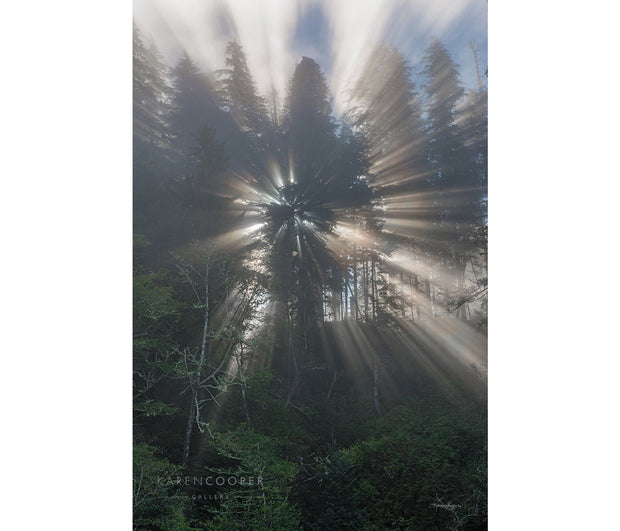 Circular marine sun rays coming through the foliage of tall, evergreen trees