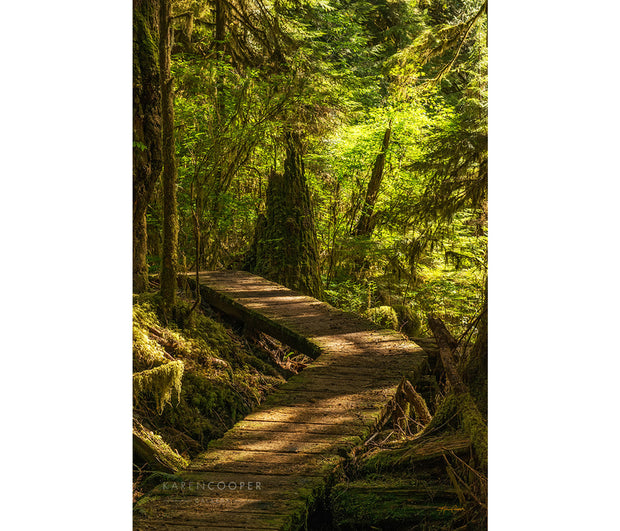 wooden pathway leading through old growth forest