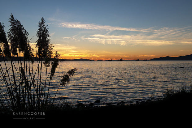 Tall grass plants along the shoreline of English Bay at sunset