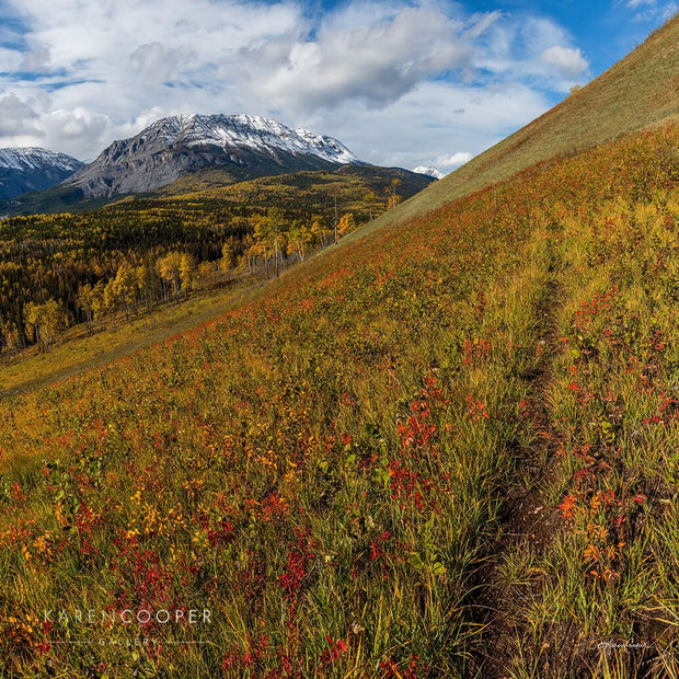 Yellow grass with patches of orange and red wildflowers growing along a sharp slope, dominating the foreground. Background filled with larch trees and other, vibrant green evergreen trees. Smooth mountain peaks covered in thick white clouds