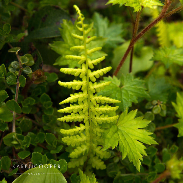Detail of a small green fern