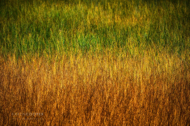 Green and orange grasses