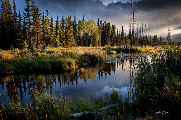 Fine art luxury nature landscape contemporary photography by Karen Cooper Gallery A still creek with lily pads under a stormy sky  with some sun coming through to bathe the nearby trees with light on a stormy spring day in British Columbia Canada