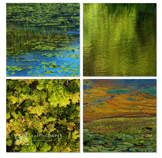 A unique collection of Fine art luxury nature landscape photography of wetlands in British Columbia, vibrant blues and greens with algae, wetland plants, and shimmering water
