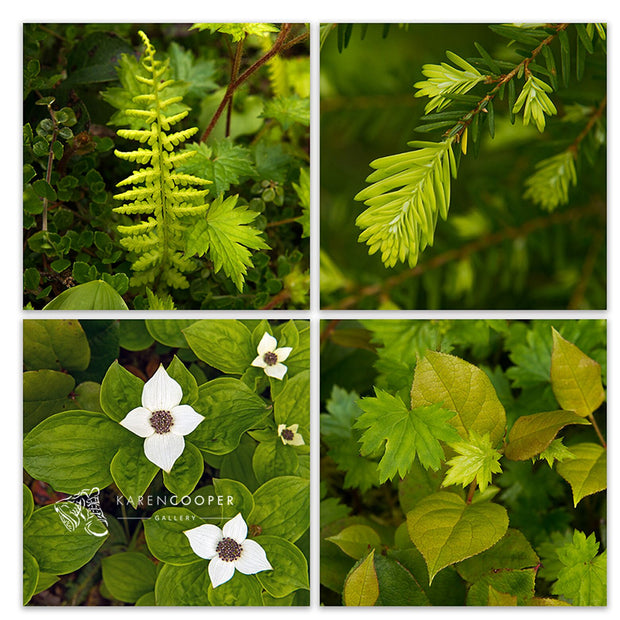 Fine art luxury nature landscape photography collection of detailed forest plants and greenery by Karen Cooper Gallery in Vancouver, British Columbia