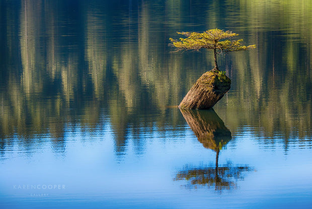 miniature douglas fir growing out of a small log in the middle of a lake. Its reflection and the reflection of the trees on the shoreline are visible in bright blues and greens.