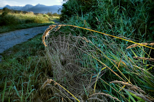 Detail of a spider web that is on a few pieces of grass. River seen in background, as well as rolling grass hills and mountain range.