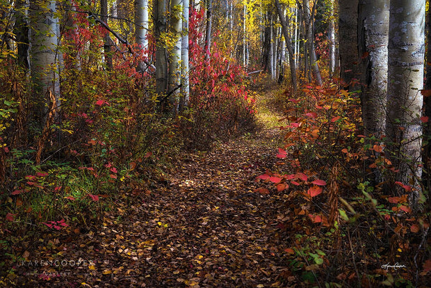 A leaf-covered pathway running through a birch tree forest in autumn, with bright yellow and red leaves