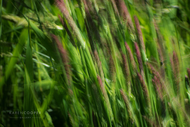 Detail of purple and green grasses moving slightly in the wind