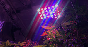 Beginners Guide To Buying LED Grow Lights ($100-200)