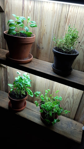 Grow spices and herbs indoor