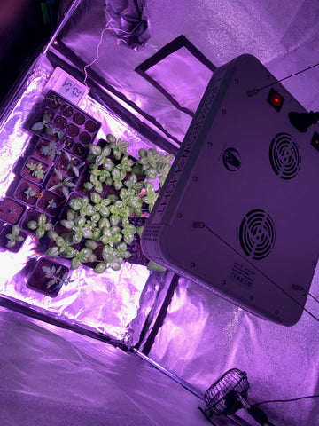 Grow basil with LEDtonic Z5 grow light
