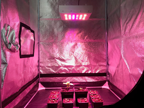 Indoor garden grow LEDTonic Z2 LED grow light