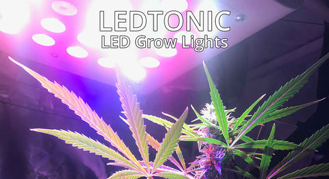LEDTonic Grow Lights