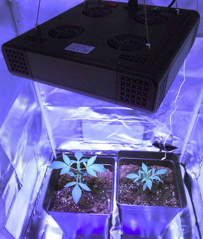 Grow weed indoors with LED grow light