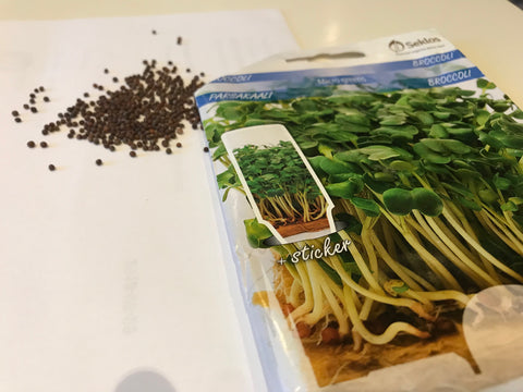 Broccoli microgreens seeds for indoor gardening