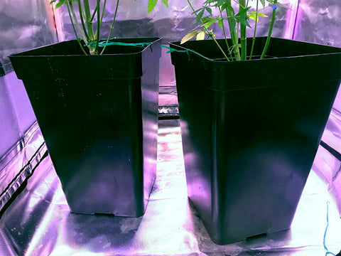 Plastic pots for cannabis indoor grow