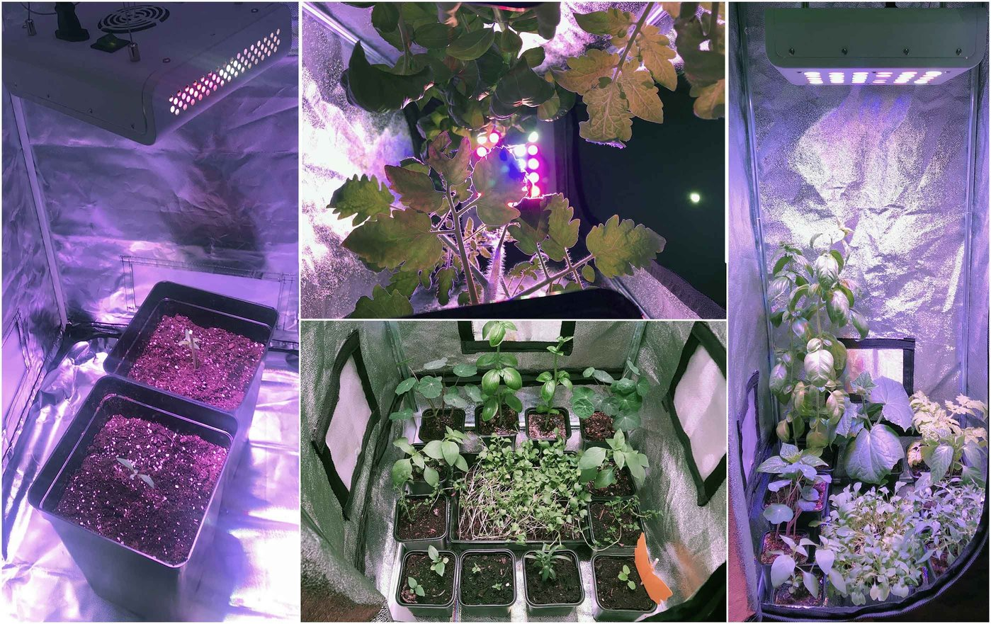 Z2 LED Grow Light