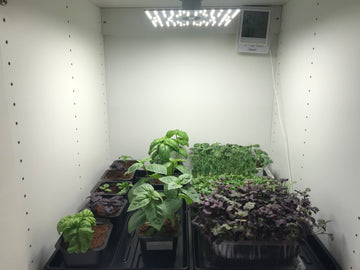 Herb garden with microgreens and LEDTonic Q2
