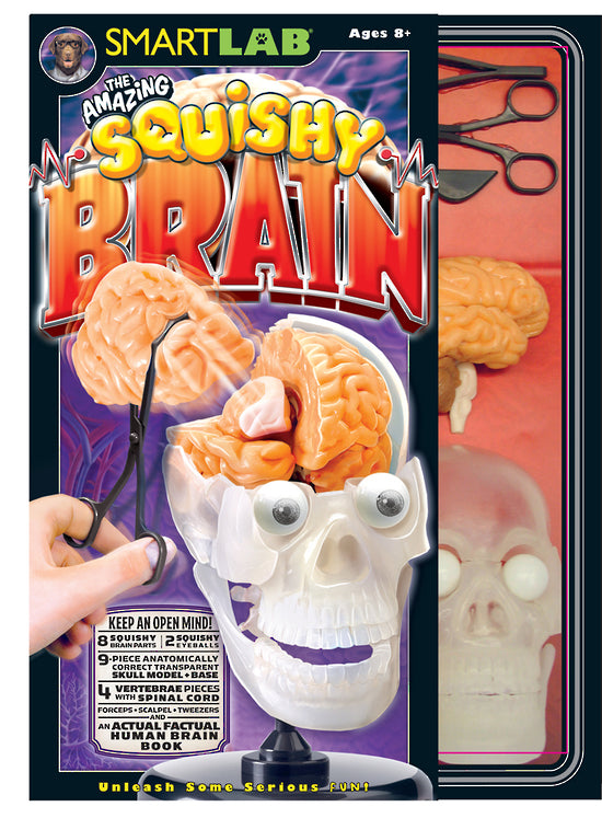 smart lab the amazing squishy brain kit