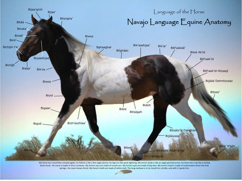 Equine Anatomy Poster | Heritage Language Resource Center