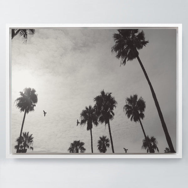 LA Palms - Stretched Canvas