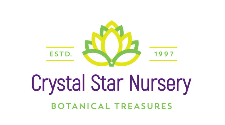 Crystal Star Nursery