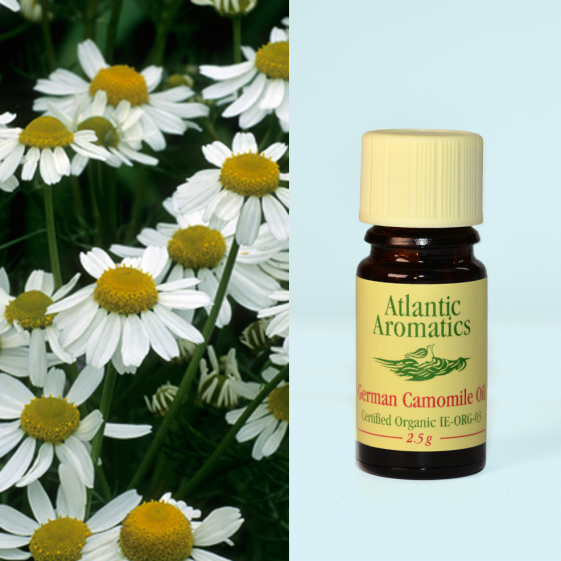 Atlantic Aromatics  - Camomile German Organic