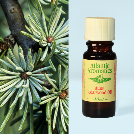 Atlantic Aromatics - Cedarwood Organic 3x10ml