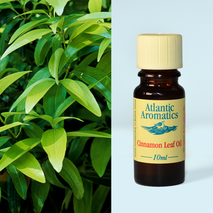 Atlantic Aromatics - Cinnamon Leaf 3x10ml