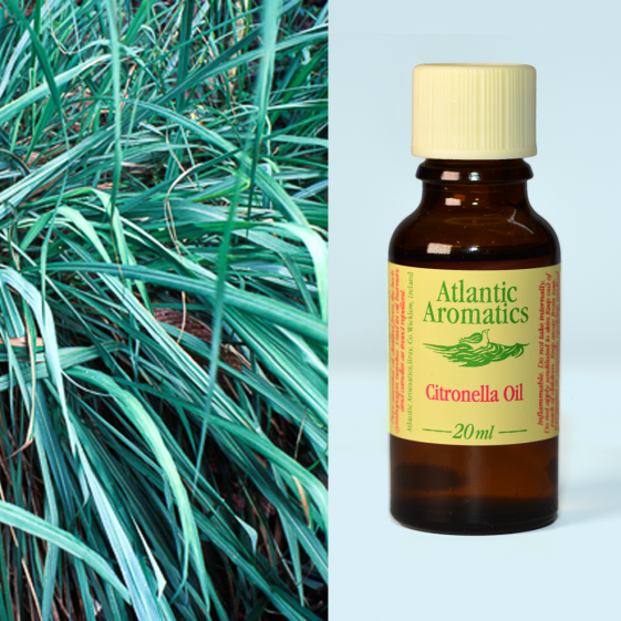 Atlantic Aromatics - Citronella Organic 3x20ml